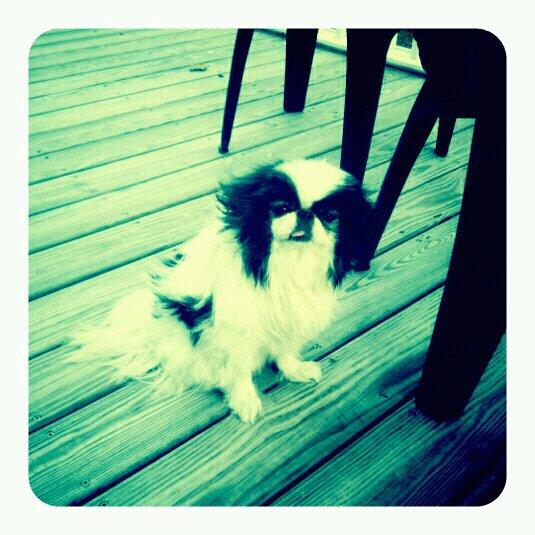 mascot dog  u00bb linkedin makeover  linkedin profile optimization