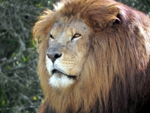 I am a LION: LinkedIn Open Networker